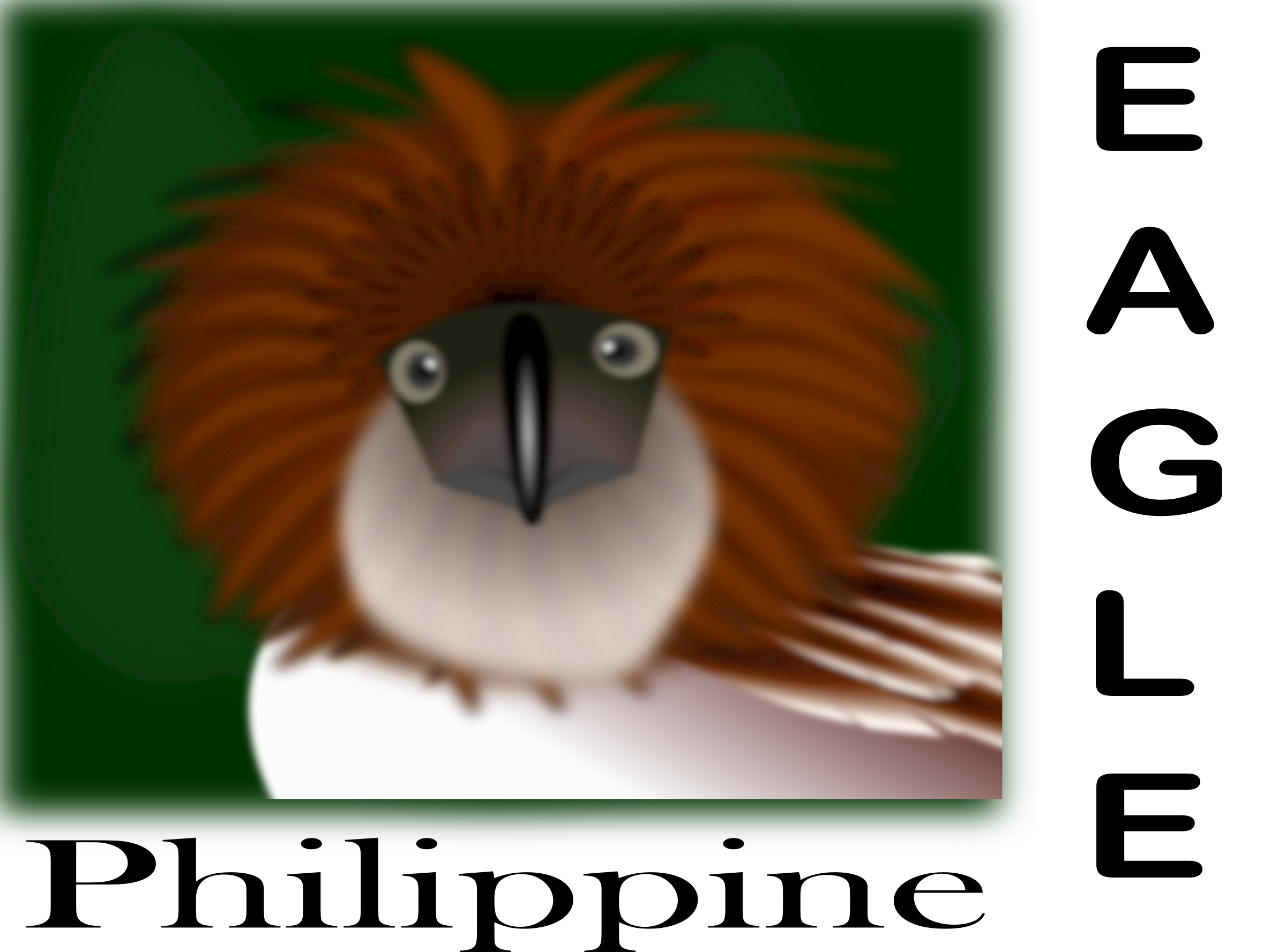 The Philippine Eagle clipart #4, Download drawings