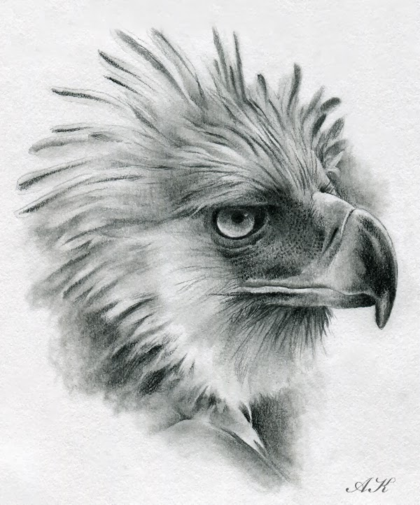 The Philippine Eagle clipart #16, Download drawings