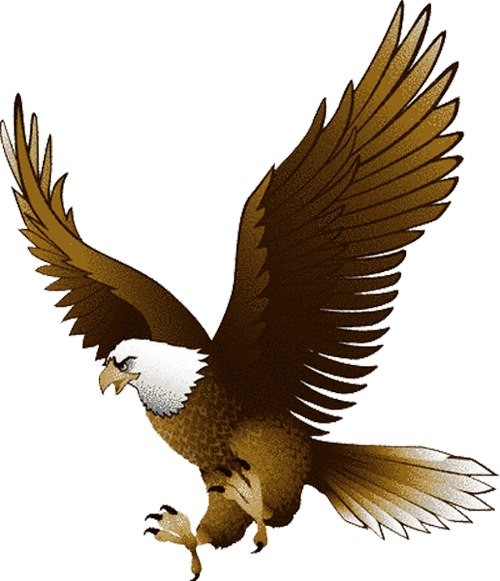The Philippine Eagle clipart #3, Download drawings