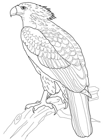 The Philippine Eagle clipart #7, Download drawings