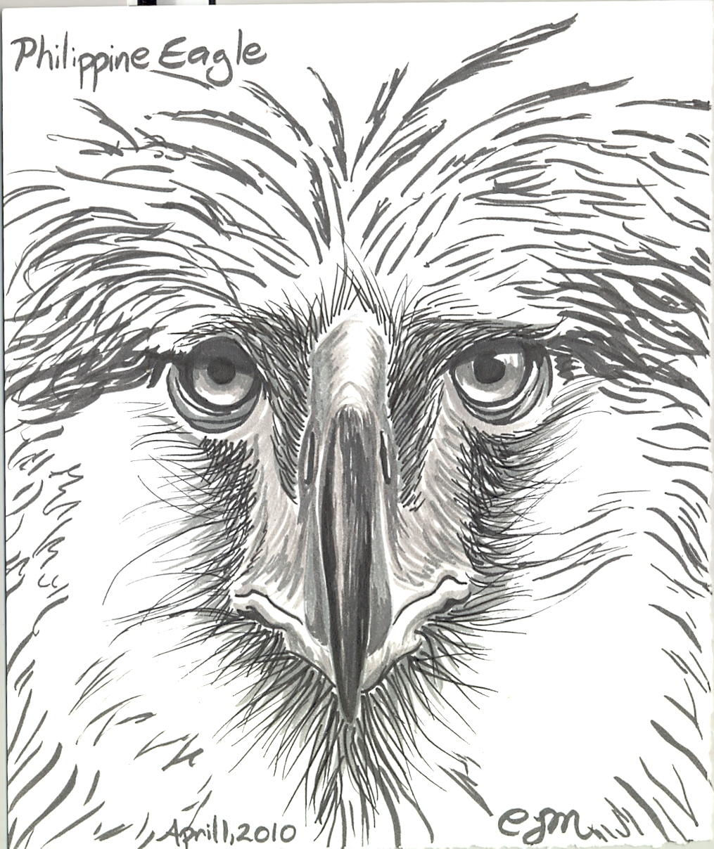 phillipine eagle coloring pages - photo#17