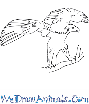 phillipine eagle coloring pages - photo#9