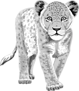 The Snow Leopards clipart #8, Download drawings