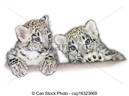 The Snow Leopards clipart #9, Download drawings