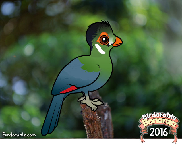 White-cheeked Turaco clipart #15, Download drawings