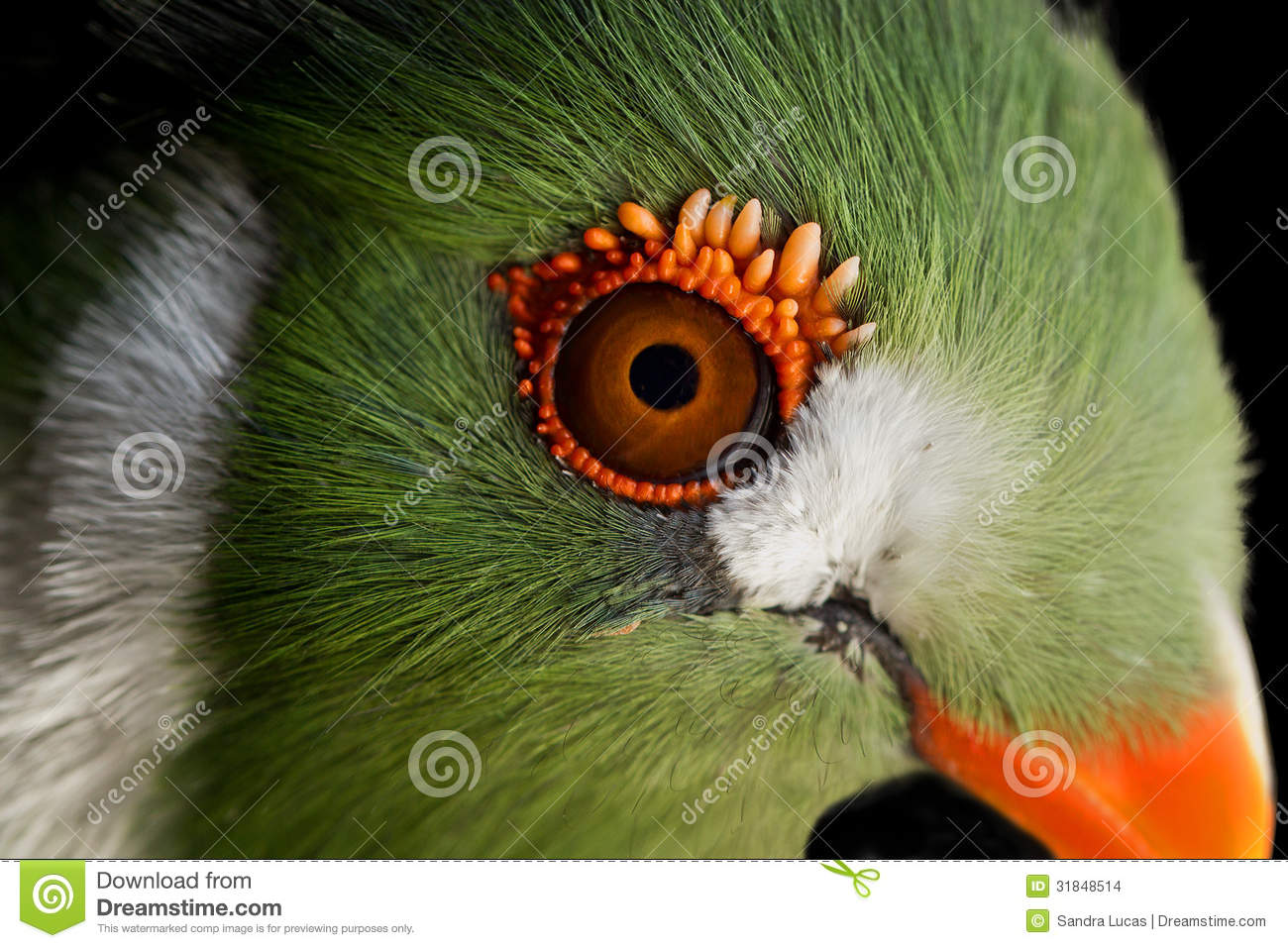 White-cheeked Turaco clipart #6, Download drawings