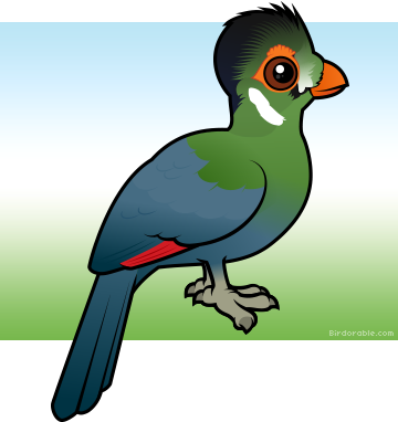White-cheeked Turaco clipart #13, Download drawings