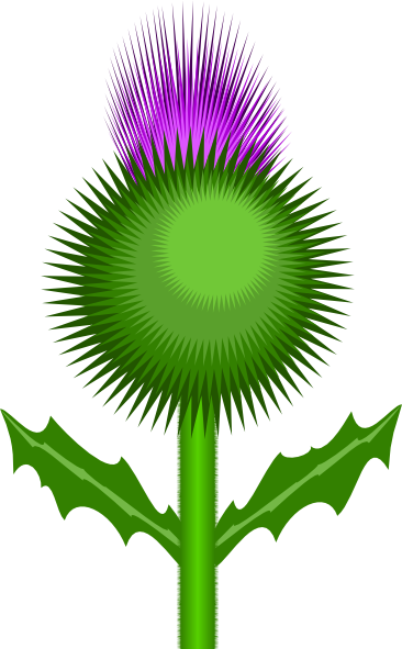 Thistle clipart #5, Download drawings