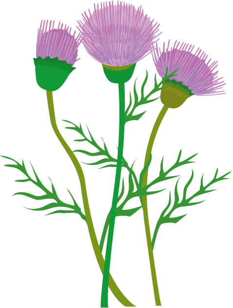 Thistle clipart #18, Download drawings