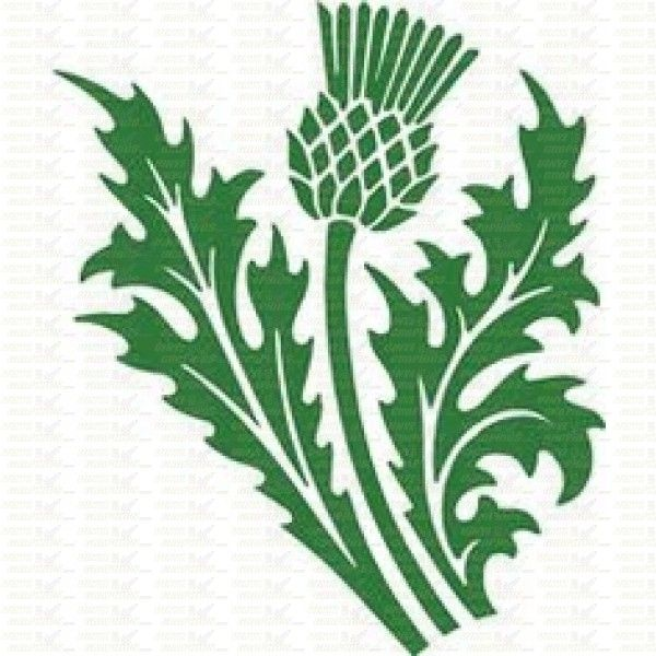 Thistle clipart #19, Download drawings