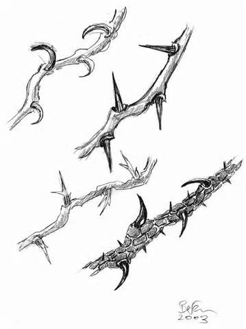 Thorns clipart #8, Download drawings