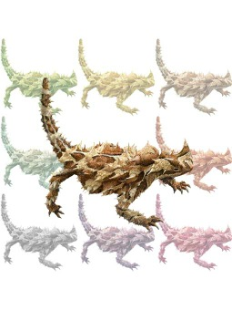 Thorny Devil clipart #5, Download drawings