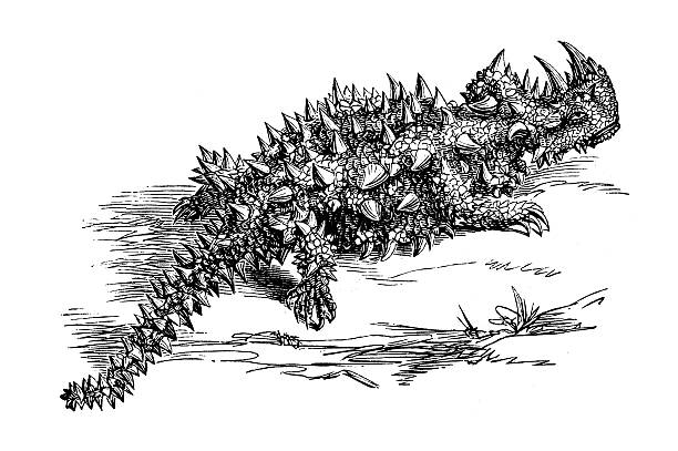Thorny Devil clipart #19, Download drawings