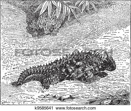 Thorny Devil clipart #9, Download drawings