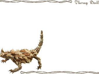 Thorny Devil clipart #11, Download drawings