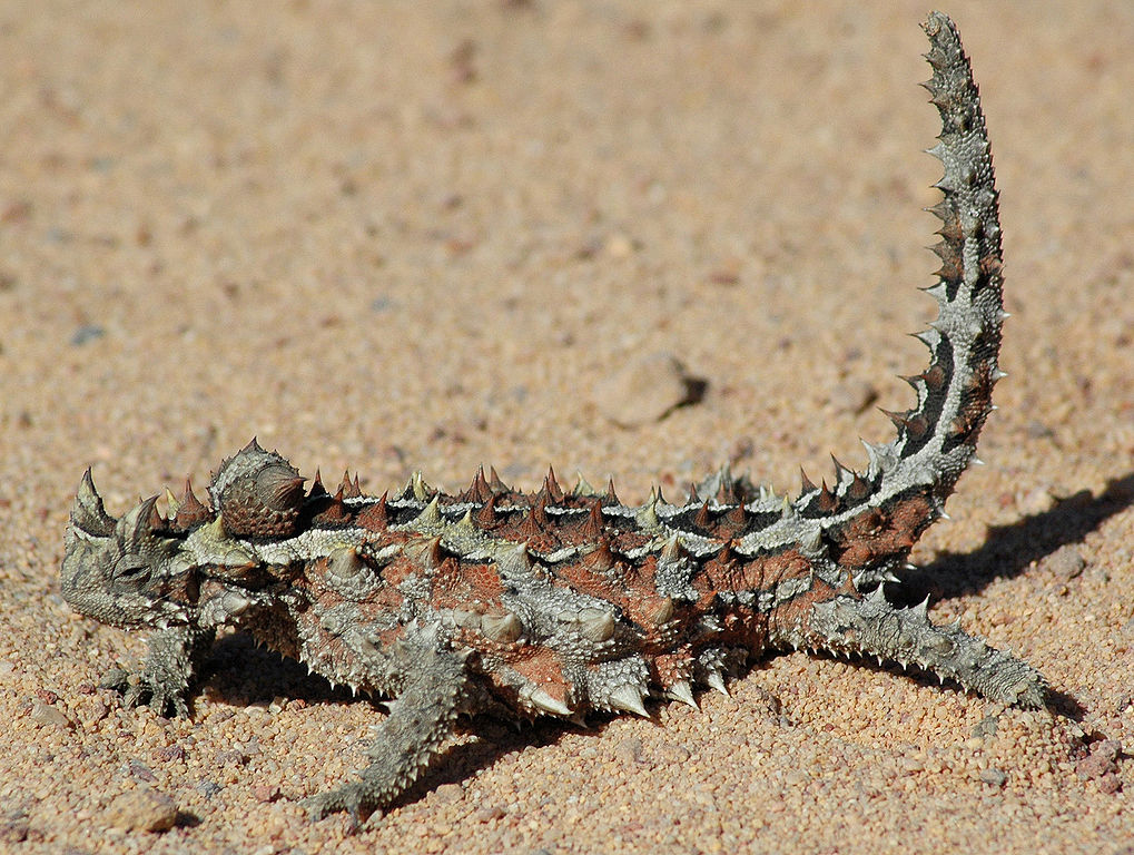 Thorny Devil svg #17, Download drawings