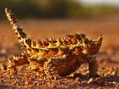 Thorny Devil svg #14, Download drawings