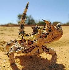 Thorny Devil svg #13, Download drawings