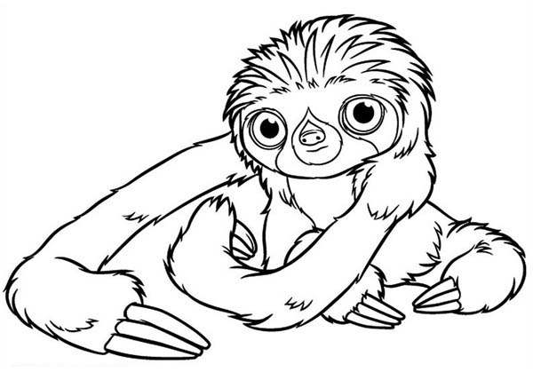 Three Toed Sloth clipart #5, Download drawings