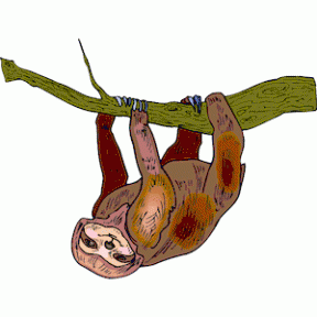 Three Toed Sloth clipart #8, Download drawings