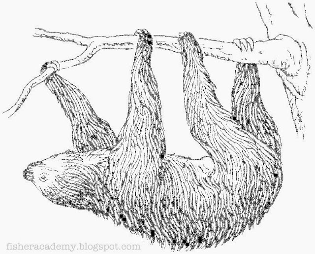 Three Toed Sloth svg #9, Download drawings