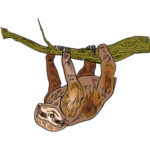 Three Toed Sloth svg #8, Download drawings