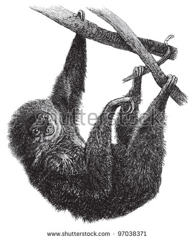 Three Toed Sloth svg #7, Download drawings