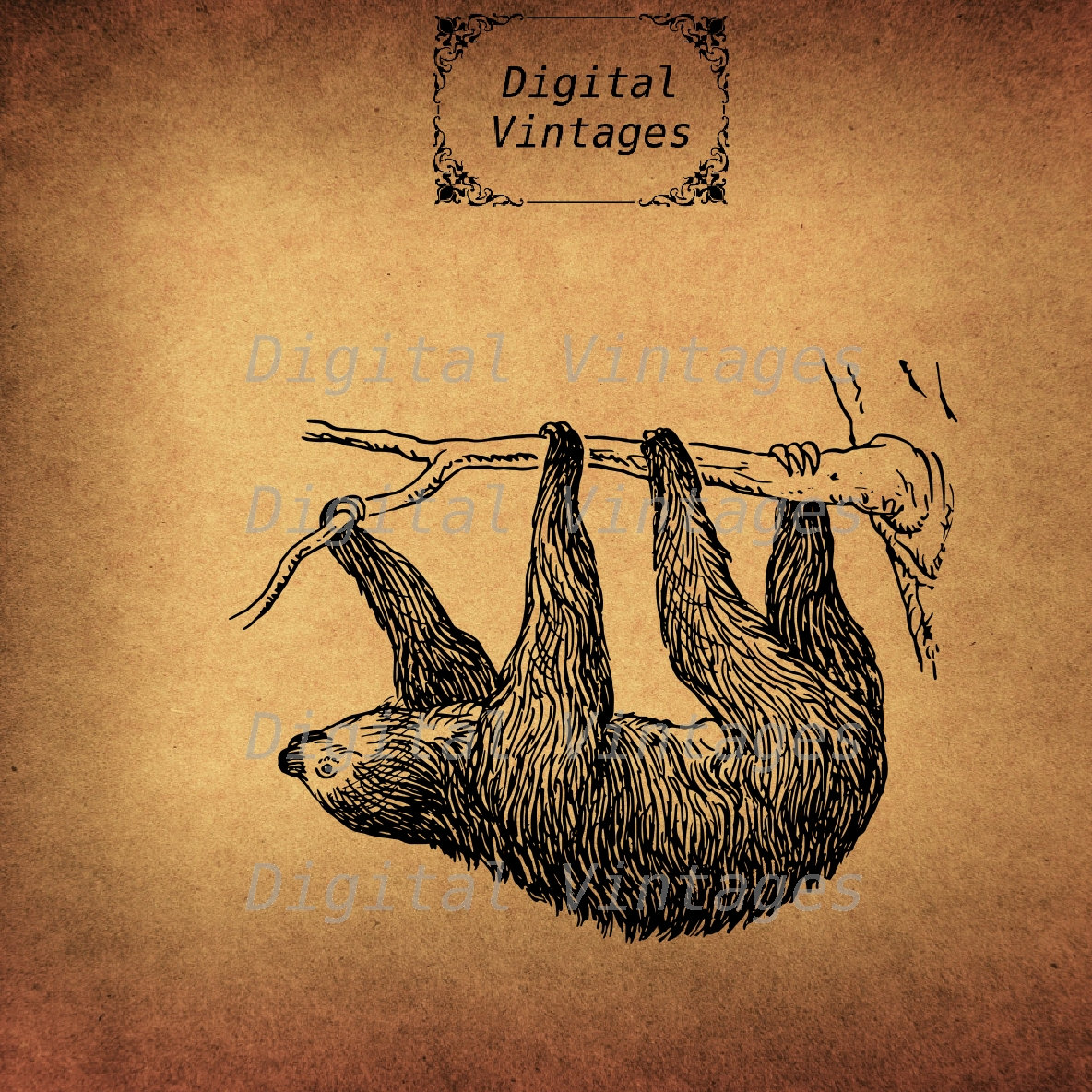 Three Toed Sloth svg #2, Download drawings