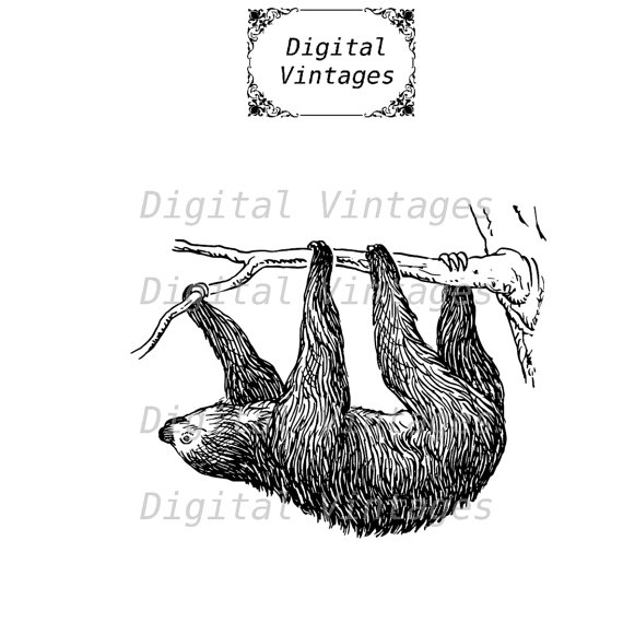 Three Toed Sloth svg #15, Download drawings