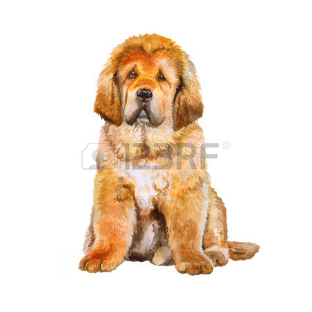 Tibetan Mastiff clipart #6, Download drawings