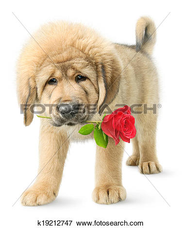 Tibetan Mastiff clipart #4, Download drawings