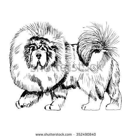 Tibetan Mastiff clipart #19, Download drawings