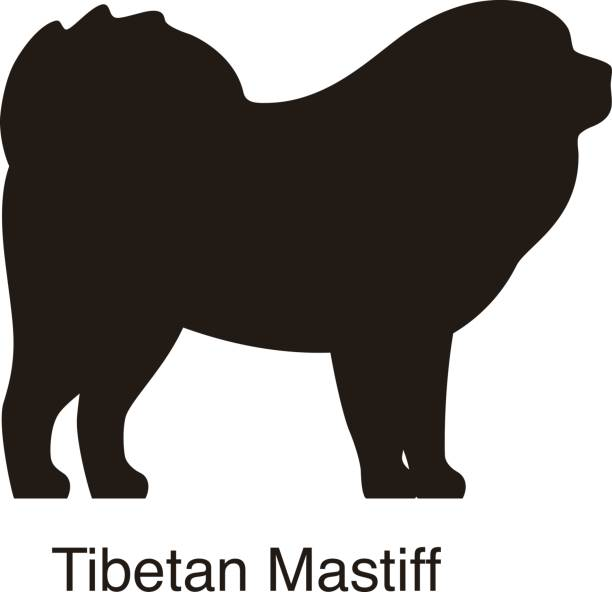 Tibetan Mastiff clipart #16, Download drawings