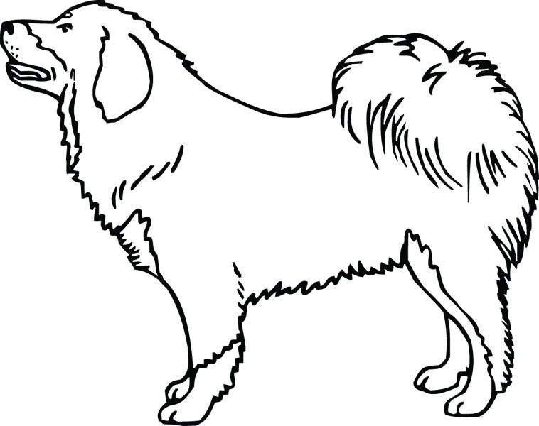 Tibetan Mastiff clipart #13, Download drawings