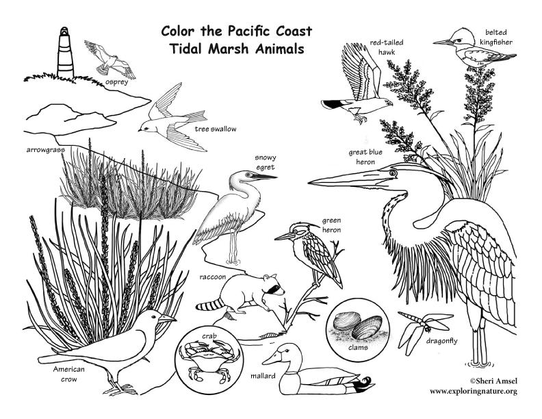 Tidal coloring #14, Download drawings