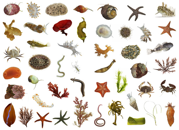 Tide Pool clipart #17, Download drawings