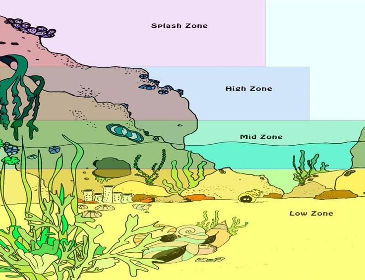 Tidal Zone clipart #6, Download drawings