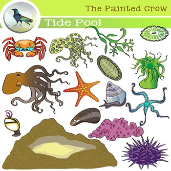 Tide Pool clipart #20, Download drawings
