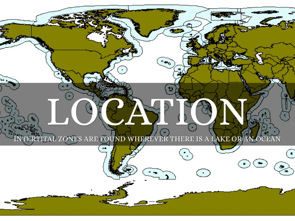 Tidal Zone clipart #17, Download drawings