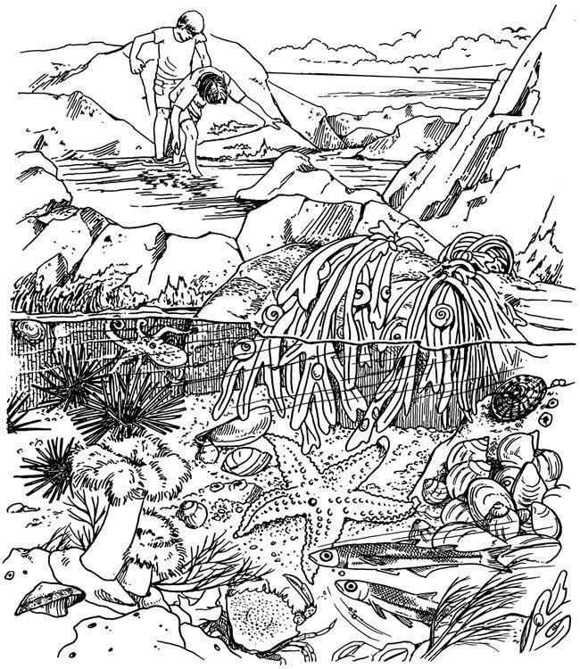 Tidal coloring #19, Download drawings