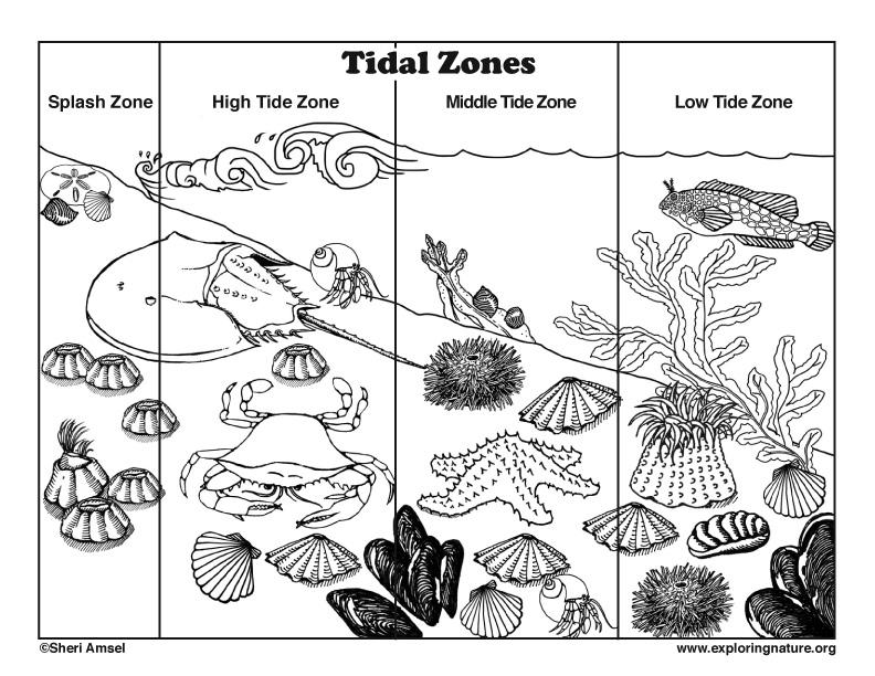 Tidal coloring #20, Download drawings
