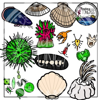 Tide Pool clipart #4, Download drawings