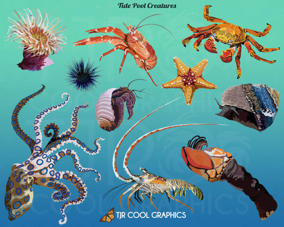 Tide Pool clipart #15, Download drawings