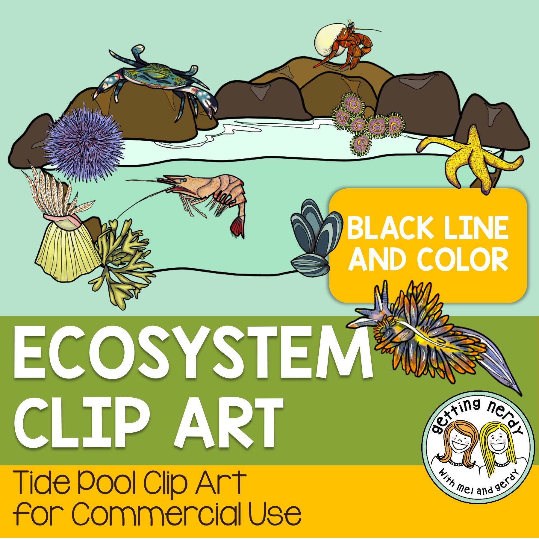 Tide Pool clipart #1, Download drawings