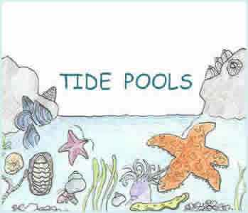 Tide Pool clipart #13, Download drawings
