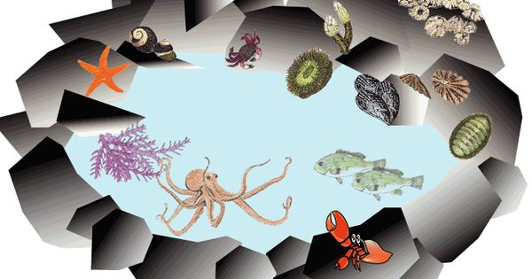 Tide Pool clipart #12, Download drawings