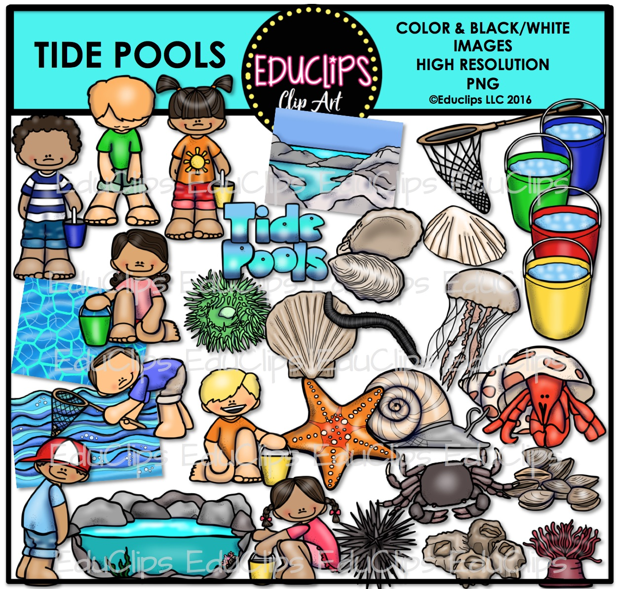 Tide Pool clipart #2, Download drawings