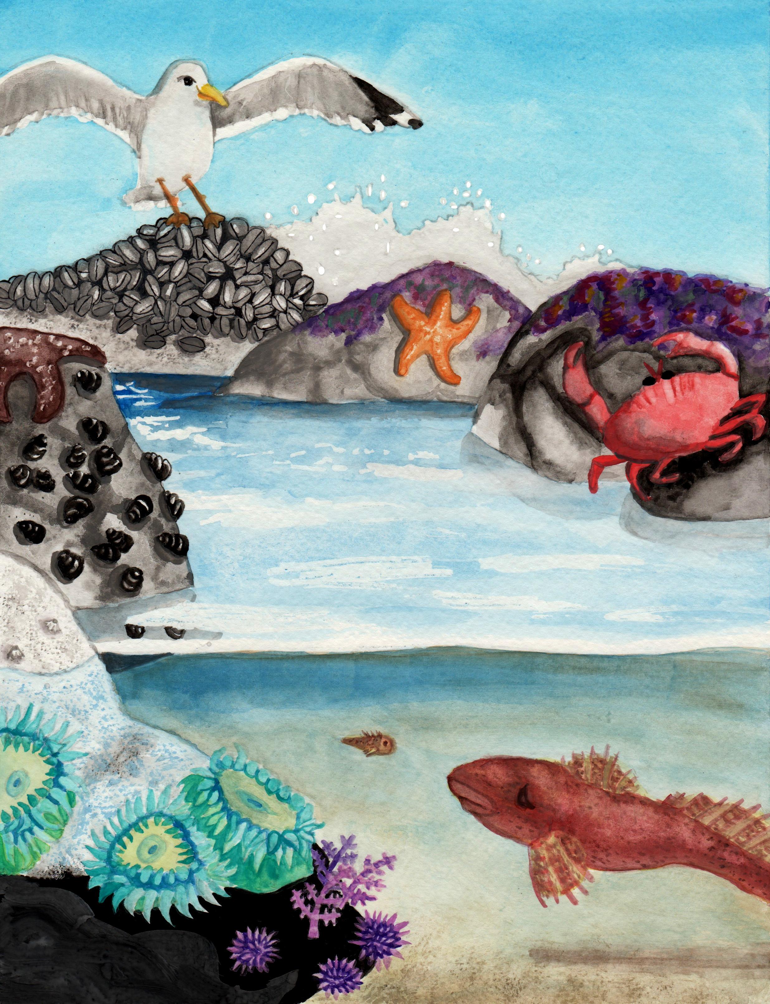 Tide Pool coloring #20, Download drawings