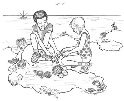 Tide Pool coloring #18, Download drawings