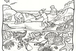 Tide Pool coloring #6, Download drawings